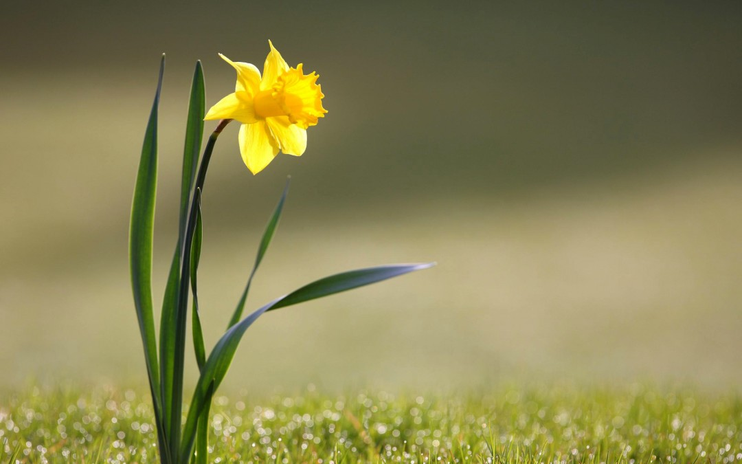 Spring Community News